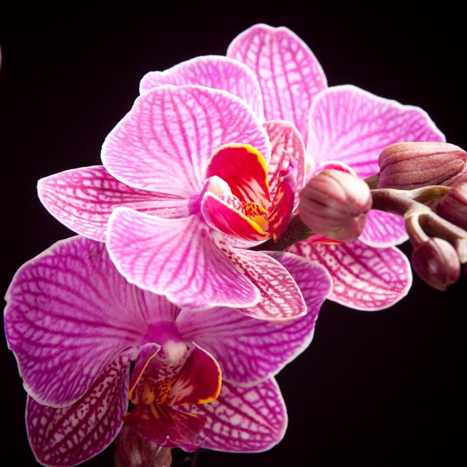"""Orchidee"""