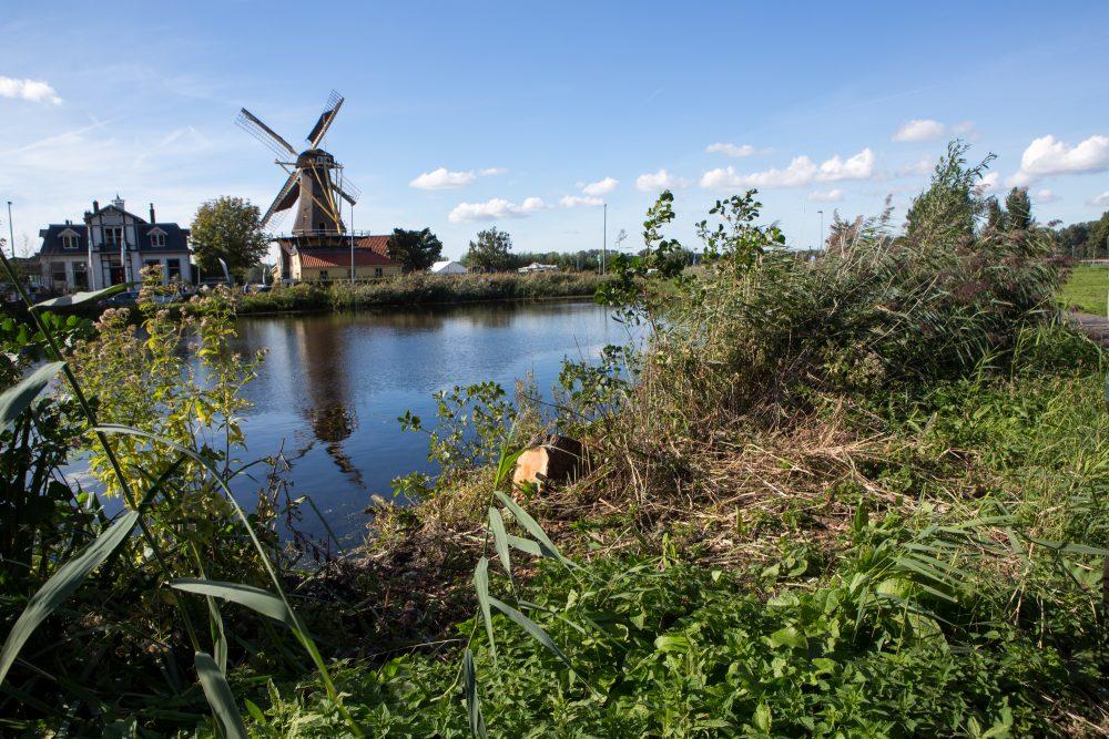 Botanische Tuin Rotterdam : Exposities in arboretum trompenburg en de botanischetuin kralingen
